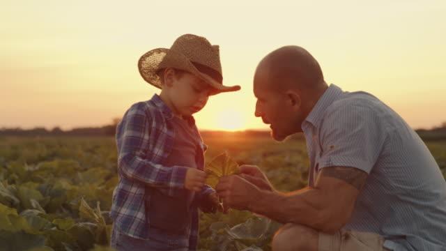 vídeos de stock e filmes b-roll de slo mo father teaches his son agriculture - colher atividade agrícola