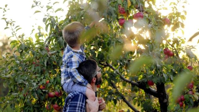 far med en liten son plocka äpplen - fruktträdgård bildbanksvideor och videomaterial från bakom kulisserna