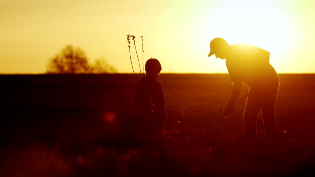 A father with a young son together plant a tree at sunset. A new life, a strong family and traditions video