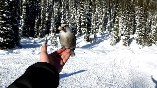 Fearless Birds video