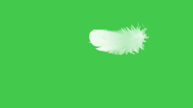 Feather Close Up Green Screen.