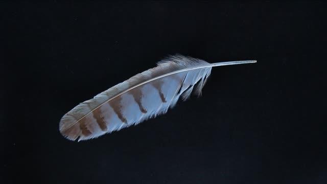 feather cuckoo bird dark background