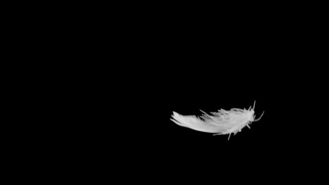 Feather Falling Slow Motion Close Up.