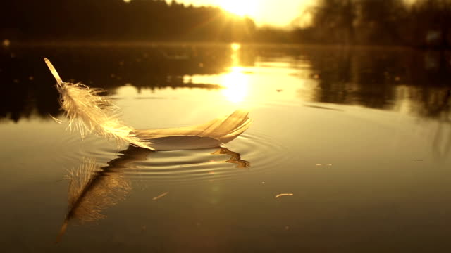 SLOW MOTION: Feather falls into the water