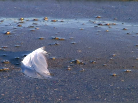 Feather Floating on Shore video