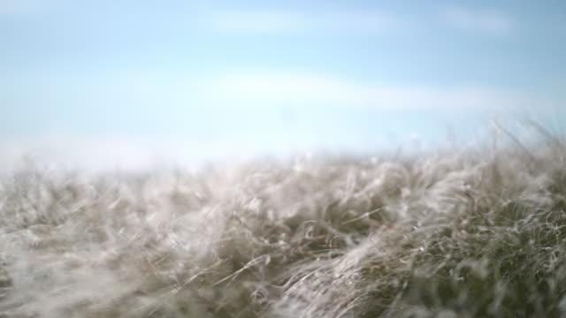 羽の草は風に発達する ビデオ