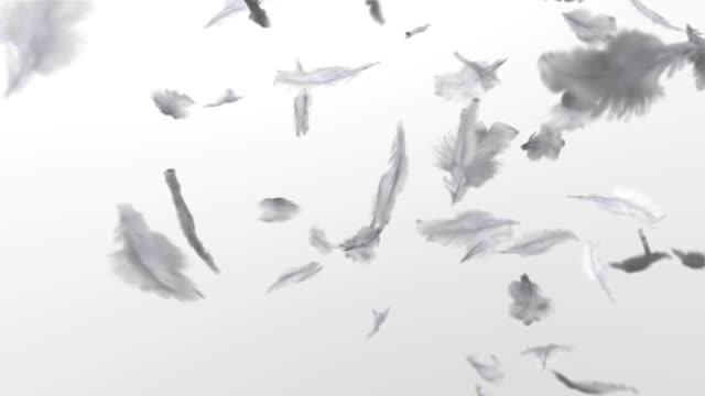 Feather where it dances
