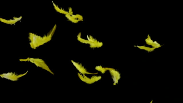 Feathers Falling Slow Motion