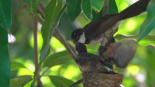 feed baby vogel - nest stock-videos und b-roll-filmmaterial