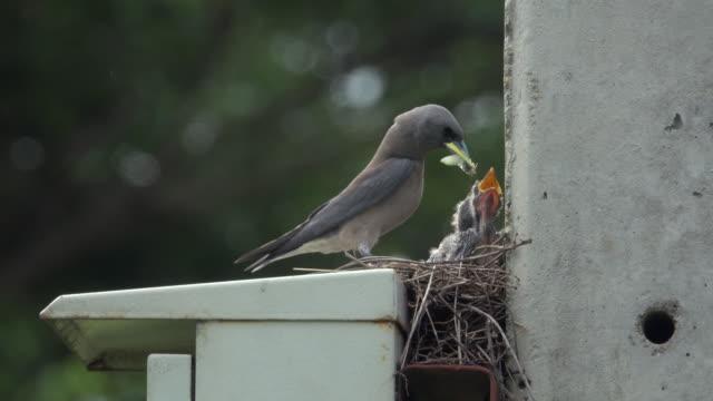 Feed Baby Bird video