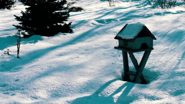Feeder for birds in winter park video