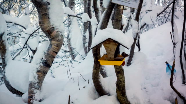 Feeder for birds with roof in the forest. video