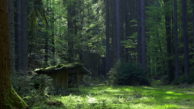 Feeder for forest animals. Idyllic road leading through forest video