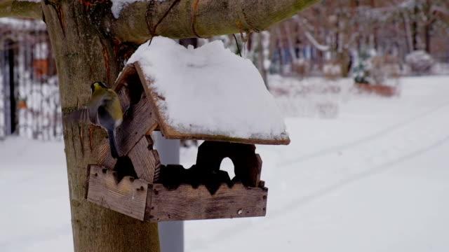 Feeding birds at winter season with wooden bird-feeder on tree at winter