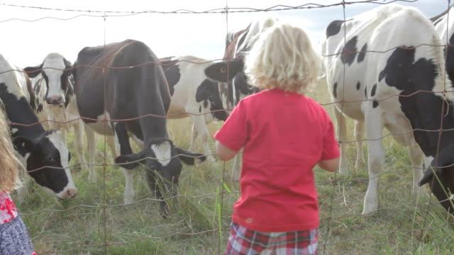 Feeding Livestock video