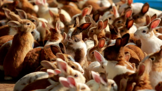 Feeding rabbits on animal farm, rabbit standing up while eating.