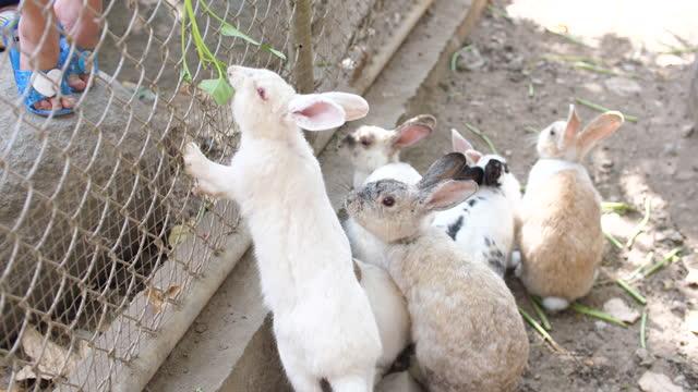 Feeding Rabbits with Morning Glory