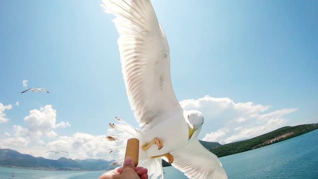 feeding seagulls in flight - battere le ali video stock e b–roll