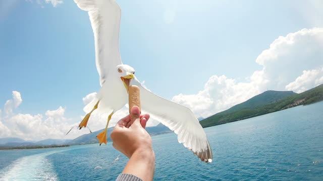 在飛行中喂海鷗 - 海鷗 個影片檔及 b 捲影像