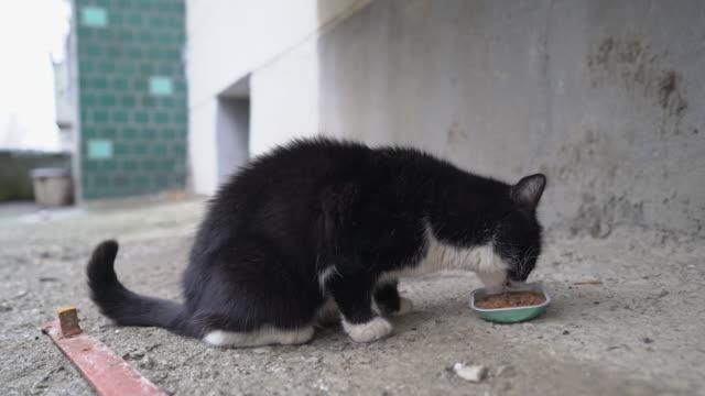 vídeos de stock e filmes b-roll de feeding stray cats. stray cat eating wet canned food for cats. - lata comida gato