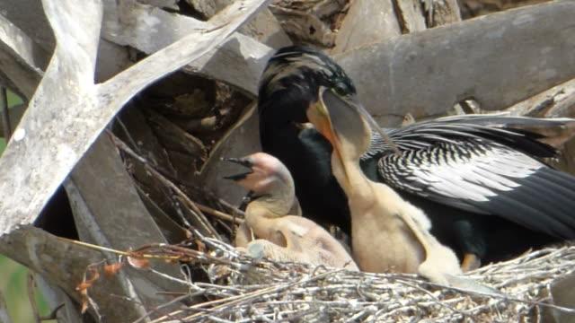 Füttern der Chick – Video