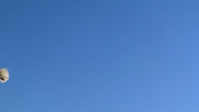 、フィーディングとかもめ-60fps スローモーション - 水鳥点の映像素材/bロール