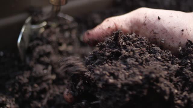den frischen schmutz und denboden in einer pflanzkiste mit menschlichen händen fühlen - gedeihend stock-videos und b-roll-filmmaterial