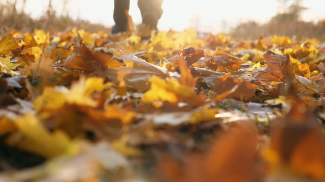 Feet of male sportsman running in autumn park stepping on color fallen leaves. Silhouette legs of athlete training outdoor at sunset time. Sunset light illuminates vivid foliage. Slow motion Rear view