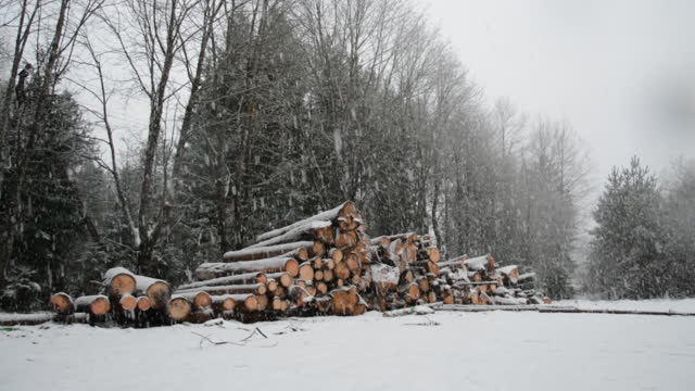 Felled forest in winter forest video