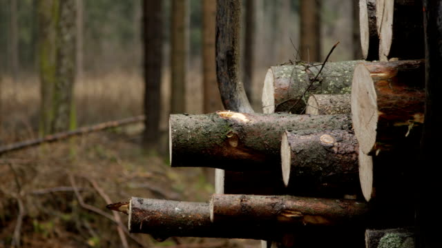 CLOSE UP, DOF: Felled logs being transported to a sawmill to be cut into lumber video