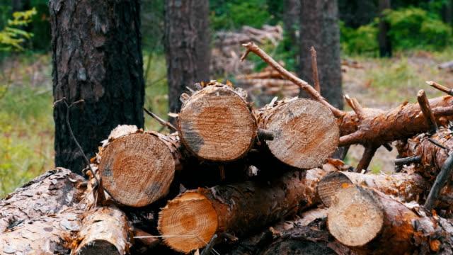 felled tree trunks in the forest. folding logs felled into a heap - молодой картофель стоковые видео и кадры b-roll