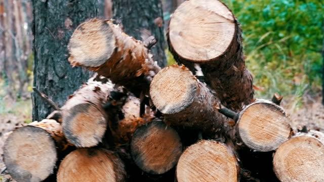 Felled Tree Trunks in the Forest. Folding logs felled into a heap video