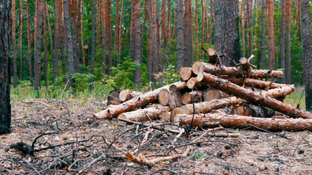 Felled Tree Trunks in the Forest video