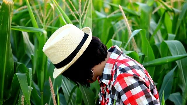 Female agronomist checks the quality of corn video