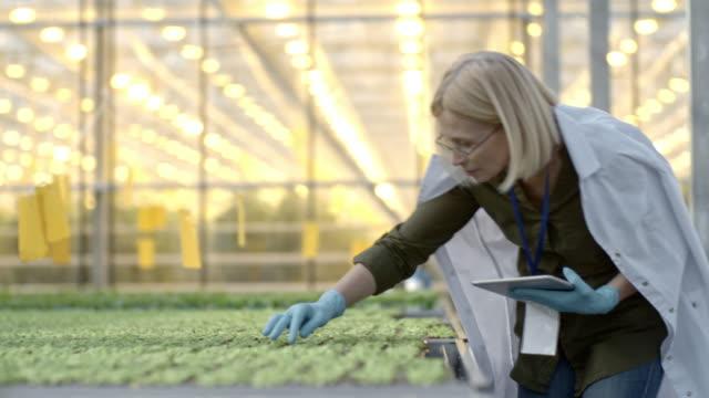 vidéos et rushes de agronome femelle inspectant semis - botanique