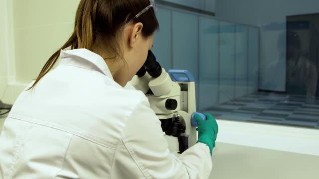 Female biologist looks in a microscope video