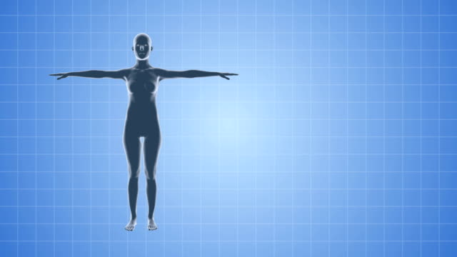 3D Female Body Medical Seamless Background video