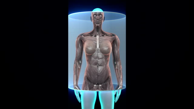 Female body scanning  human muscle, blood system. X-ray image. video
