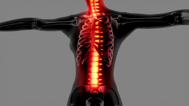 Female Body With Highlighted Visible Skeleton video
