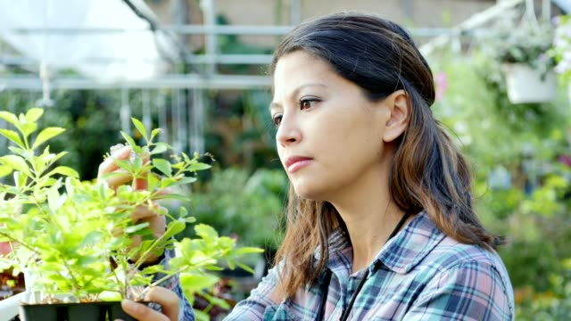 Female botanist examines the health of a plant video