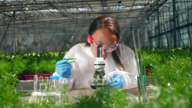 female botanist uses microscope while working with sprouts. - orticoltura video stock e b–roll