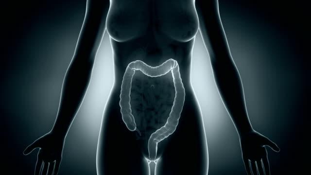 Female colon anatomy video