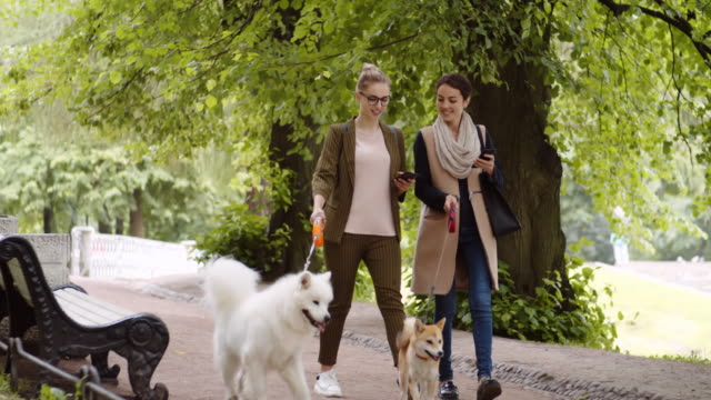 Female Dog Owners Using Devices in Park Two young diverse female dog owners walking with Shiba Inu and Samoyed in park while using their telephones and having talk leash stock videos & royalty-free footage