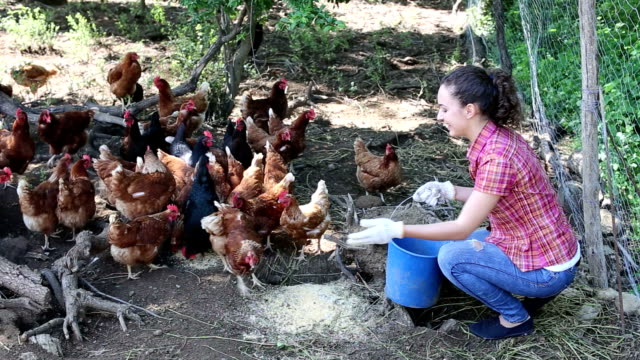 female farm worker giving feeding stuff to chickens video