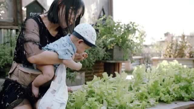 female farmer and son in organic farm - gardening video stock e b–roll