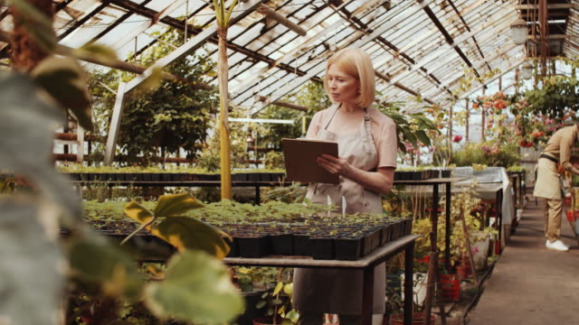 female farmer checking plants in greenhouse - orticoltura video stock e b–roll