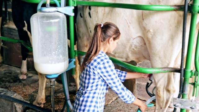 vídeos de stock e filmes b-roll de female farmer controlling process of automatic milking of cows - ordenhar