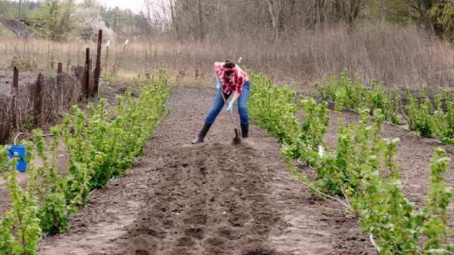 female farmer in checkered red shirt and jeans, digs holes with glanders for planting seeds in ground. spring sunny day. Eco farm. Home gardening. agriculture, equipment - vídeo