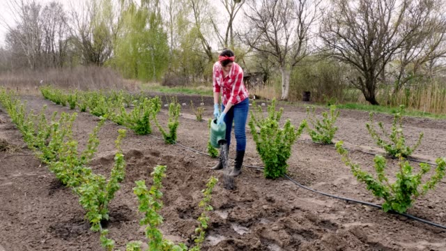 female farmer in checkered red shirt and jeans, waters holes with watering can for planting seeds in ground. spring sunny day. Eco farm. Home gardening with equipment