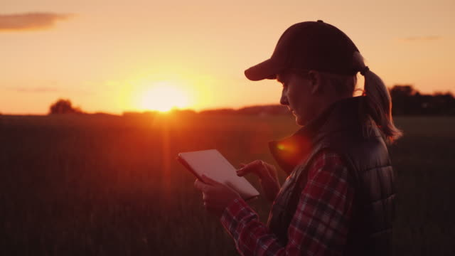 A female farmer is working in the field at sunset, enjoying a tablet. Technologies in agrobusiness video